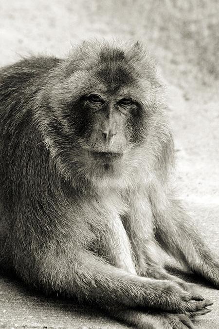 Monkey See, Monkey Do (2007)