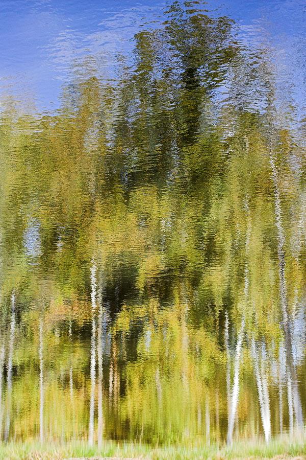 Bäume reflektieren sich im Wasser