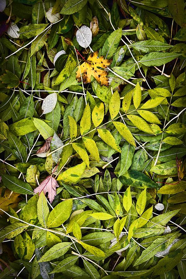 autumn III - raventhird.de