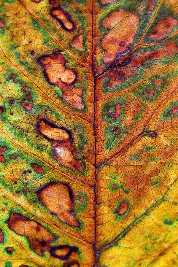 One Leaf (2008)