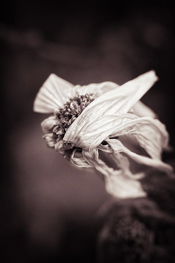Pflanzen wissen, wie man elegant stirbt. (2012)