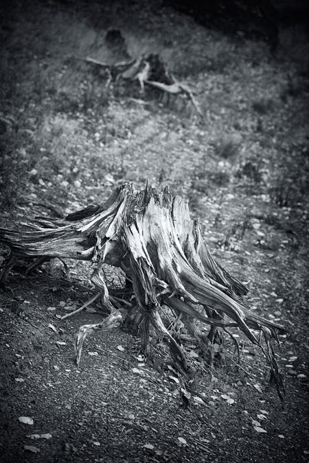 Im Tal der toten Bäume (2013)