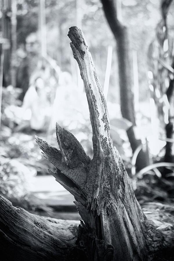 Der Aufstand der Baumwesen (2013)